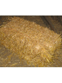 Straw - Small square conventional bale