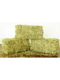 Hay - Small conventional bale